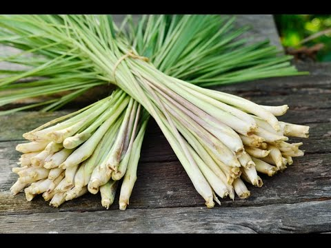 The smart Trick of How To Plant Lemon Grass Seeds That Nobody is Talking About