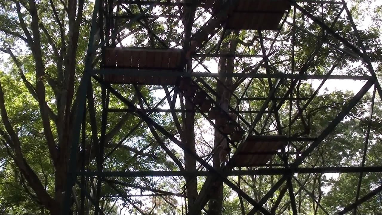 Indiana martin county shoals - Daring Fire Tower Rescue Martin State Forest Doug Brassine