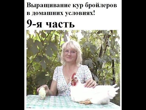 Как запечь куриные бёдра. Сколько запекать куриные бёдра