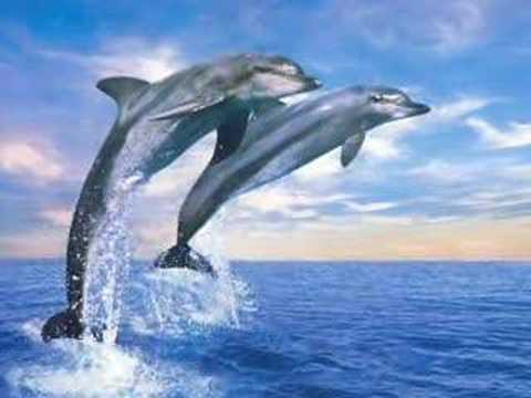 JW - The Big Blue (Dolphins) - YouTube