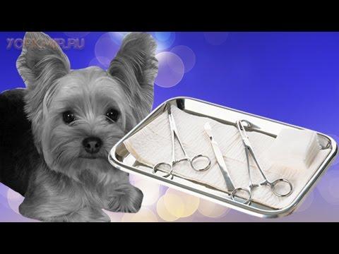 Кастрация собак | Плюсы и минусы | Последствия.