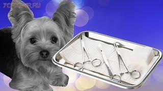 Кастрация собак | Плюсы и минусы | Последствия.(Кастрация собак — процедура несложная, однако нужно взвесить все плюсы и минусы. Чтобы было комфортно,..., 2015-12-30T05:38:10.000Z)