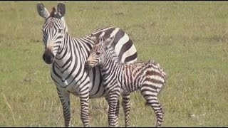 Amazing Africa - Wild Animal Documentary  - National Geographic