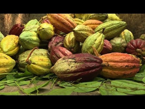Madagascar's world-class cocoa, a bitter sweet cash crop