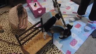Moo Cat's Feline Finishing School-Baseball Kittens Play in the Cat Canoe