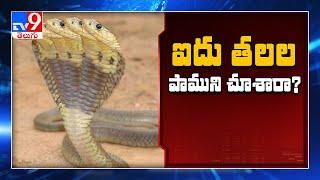 Five Headed Snake News In Social Media   Edi Viral Edi Real   Tv9