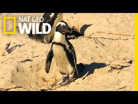 Penguin Crime Spree | South Africa