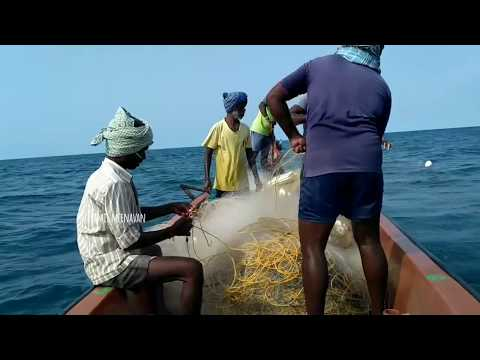 Traditional fishing in tamilnadu sea shore,India