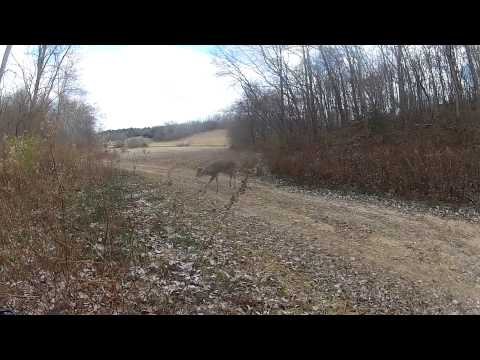 2014 Illinois Big Buck Encounter