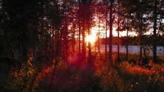 Tauski - Oranssin auringon alla