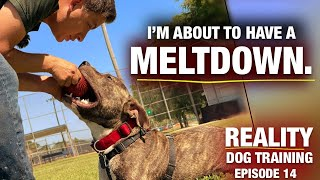 Getting This Dog to Do What He Doesn't Want to do. [Reality Dog Training EP 14]