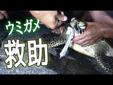 釣り針が掛かったウミガメを救助![宮古GT狙い 3/6]