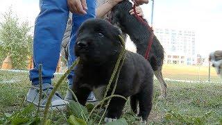 Всем на свете нужен дом  В Саранске состоялась ярмарка бездомных животных