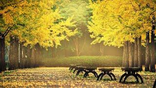 autumn leaves orgel cover (aut…