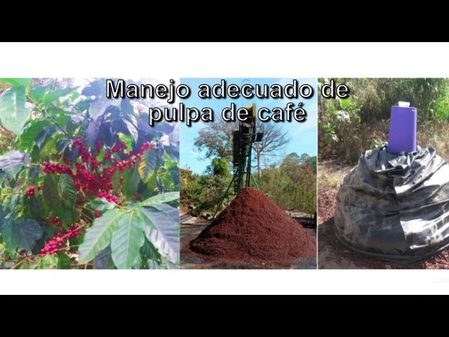Acciones Climáticas en el Sector Agropecuario de Costa Rica