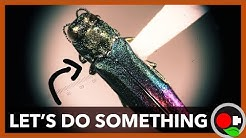 The Emerald Ash Borer is Coming!