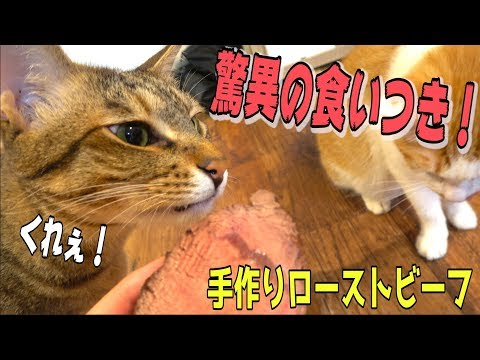 猫たちにローストビーフを作ってみたらすごい勢いで食いついたwww