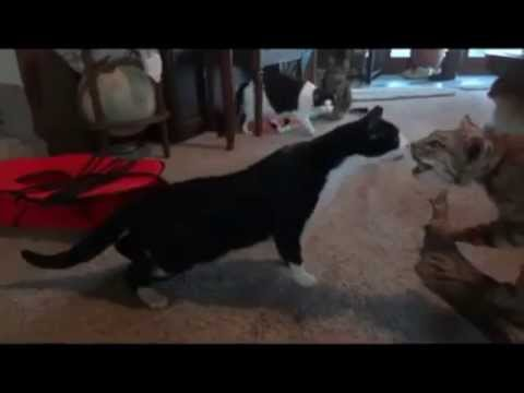 Funny Animals Doing Stupid Things – Funny Compilation 2013