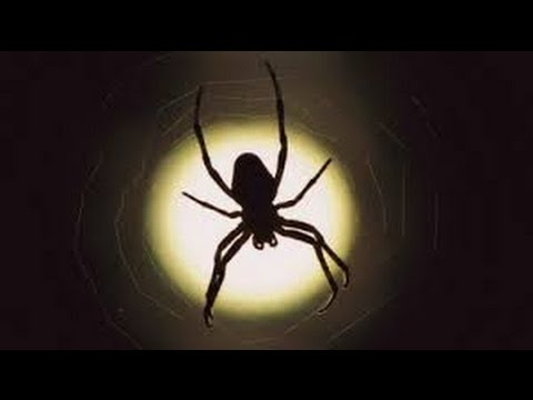 Spider As A Totem: Your Personal Power Animal's Personality Characteristics And Life-Path Lessons