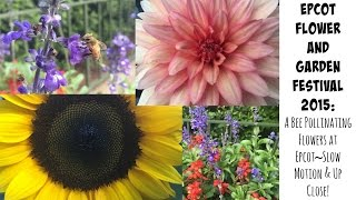 Disney Vlog:  Epcot Flower & Garden Festival:  A Bee Pollinating Flowers~Up Close & Slow Motion