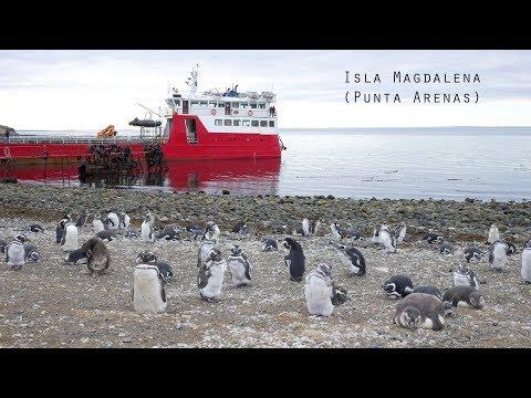 Isla Magdalena Punta Arenas Tour Penguins