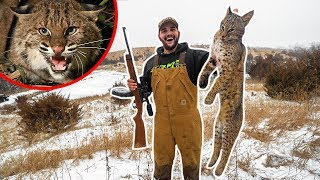 Backyard BOBCAT Catch Clean Cook!!! (Best Meat Ive Put In My Mouth)