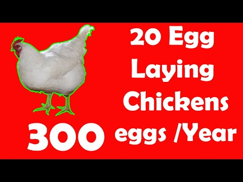 20 Best Egg Laying En Hen Breeds