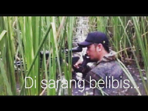 Berburu Belibis (Shooting Lesser Whistling Duck) di Rawa-rawa Pantura-Jawa Tengah