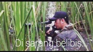Berburu Belibis (Lesser Whistling Duck) di Rawa-rawa Pantura-Jawa Tengah