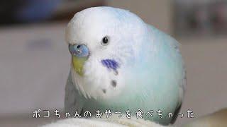【おしゃべり】そらちゃんがポコちゃんのおやつを食べた理由を告白? そしてあの名前もついに呼んだ!