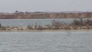 New Suez Canal: exclusive video of the two channels and Mrorsfana