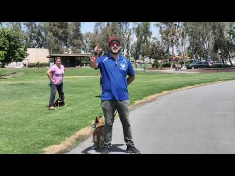 Teaching Dog Owners How To Control Their Dogs in a Group Class & Work Through Problems