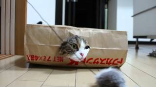 Various paper bags and Maru.-