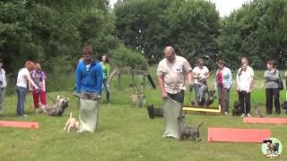 Керн терьер Олимпиада 2014. Cairn Terrier Olympics 2014
