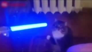 Видео приколы  про котов кошки собаки птицы