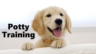 How To Potty Train A Golden Retriever Puppy - Golden Retriever Training - Golden Retriever Puppies