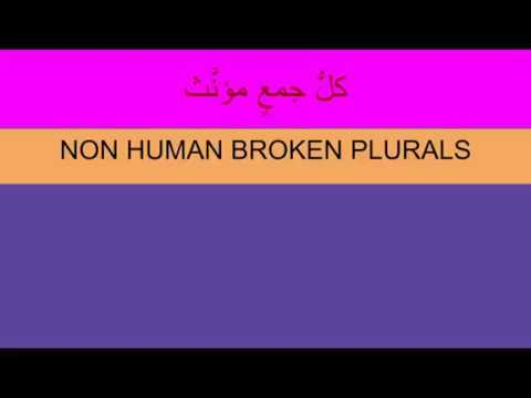 Madina 1   Lesson 39   Introduction to Non Human Broken Plurals