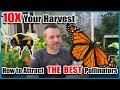 10X Your Vegetable Harvest - Attract The Best Pollinators To Your Garden.
