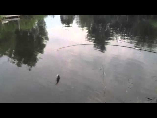 Der erste selbst geangelte Fisch