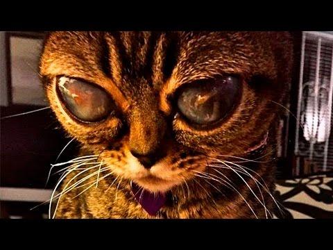10 Increíbles Gatos Que No Creerás Que Existen - Los mejores Top 10