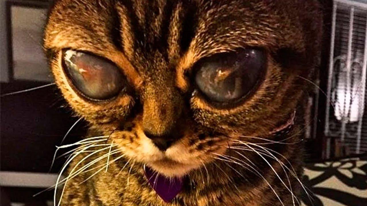 Pokmon Cat Animal
