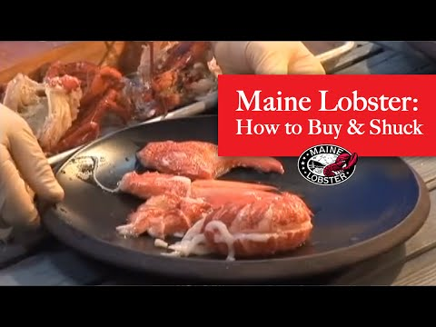How to Buy and Shuck Fresh Maine Lobster