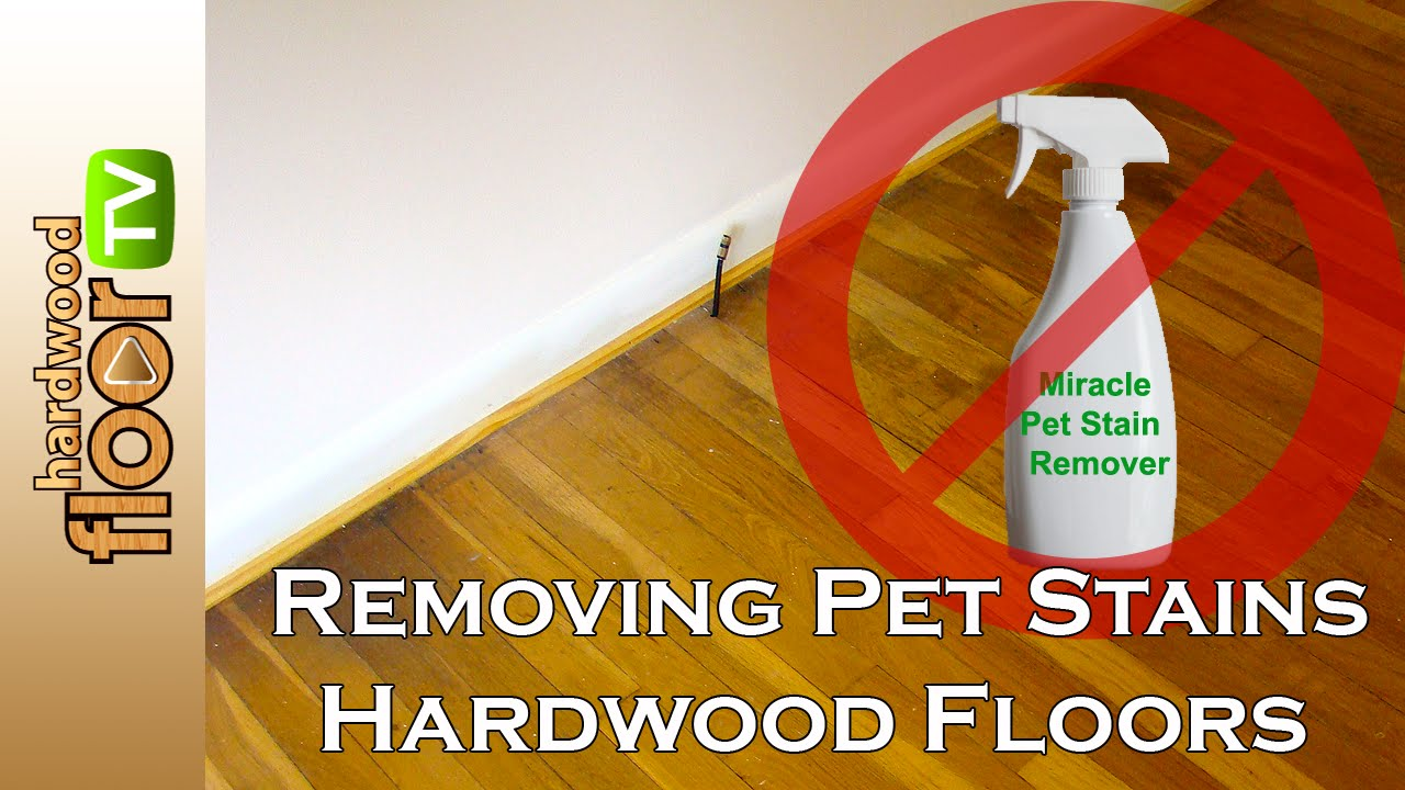 remove pet urine stains from hardwood floors - youtube
