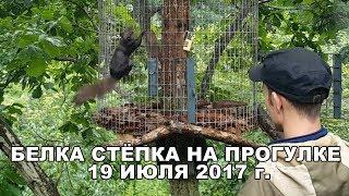 БЕЛКА СТЁПКА НА ПРОГУЛКЕ 19 ИЮЛЯ 2017 г.