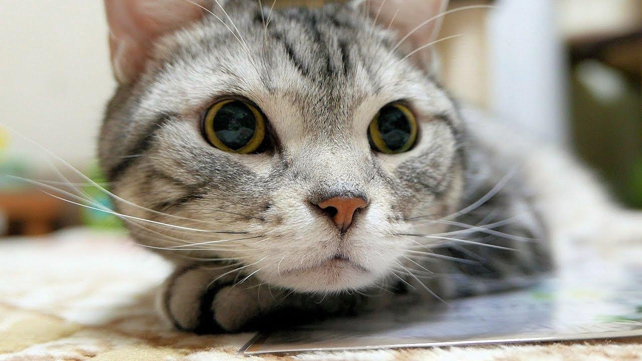 目まぐるしく変わる表情が可愛い 壁紙シールと猫 Youtube