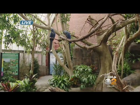 National Aviary Unveils Newly-Renovated Rainforest Exhibit