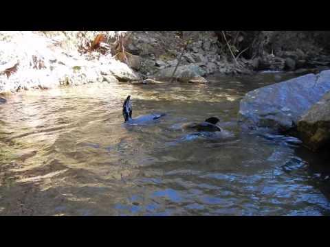 Wild seal puppies