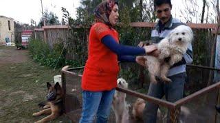 كلب لولو  دوخ كل الي في المزرعة  وهرب من شيماء وياتري عمل معانا ايه