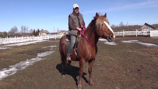 Как научить лошадь работе на кордео