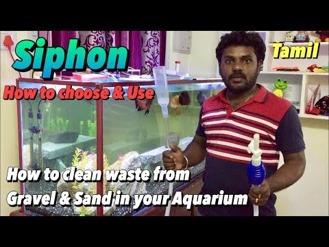 How to clean waste from Sand & Gravel in your Aquarium- Tamil